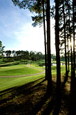 tee stock photography | Alabama, RTJ Golf Trail, Greenville, Cambrian Ridge, 8th tee, Canyon, image id 2-556-19