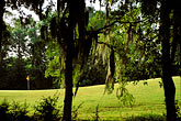 green stock photography | Alabama, RTJ Golf Trail, Prattville, Capitol Hill, Spanish moss, image id 2-557-66