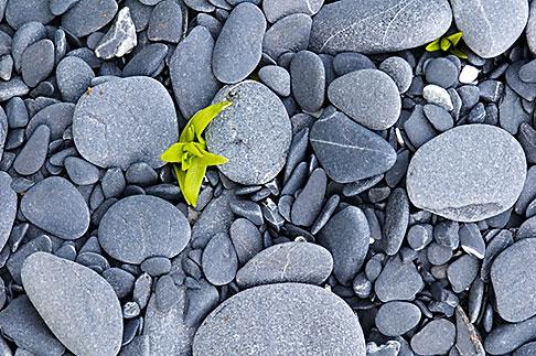 image 5-650-1690 Alaska, Kodiak, Beach pebbles
