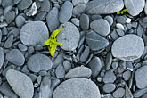alaskan stock photography | Alaska, Kodiak, Beach pebbles, image id 5-650-1690