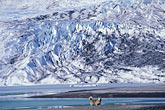 color stock photography | Alaska, Juneau, Mendenhall Glacier and husky, image id 7-178-7