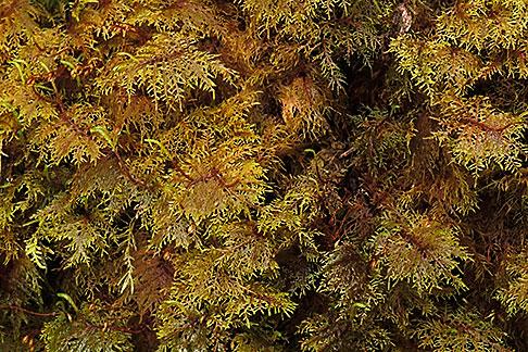image 8-350-11 Alaska, Southeast, Moss