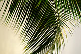 lush foliage stock photography | Antigua, Palm frond, image id 4-600-20