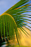 blue background stock photography | Antigua, Palm frond and sugar mill, image id 4-600-37