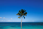 blue stock photography | Antigua, Jabberwock Beach, Palm, image id 4-600-53