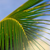 blue background stock photography | Plants, Palm fronds, image id 4-600-937