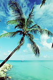 bay stock photography | Antigua, Dickenson Bay, Palm and beach, image id 4-601-16