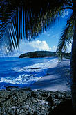 palm tree stock photography | Antigua, Hawksbill Beach, image id 4-601-62