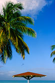palm tree stock photography | Antigua, Beach Umbrella, image id 4-601-95