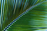 lush foliage stock photography | Antigua, Palm frond, image id 4-602-60