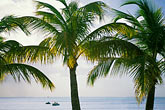 sea stock photography | Antigua, Jolly Harbor, Palms and beach, image id 4-602-88
