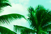 sky stock photography | Antigua, Palms, image id 4-602-98