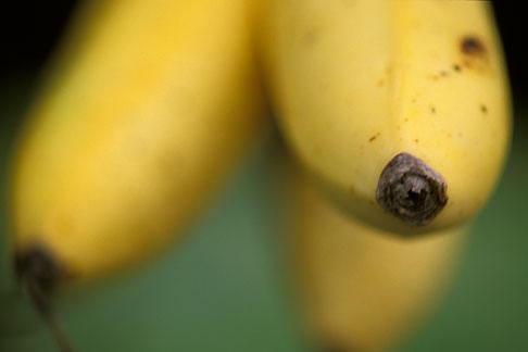 image 4-603-4 Fruit, Yellow Bananas