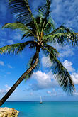blue stock photography | Antigua, Dickenson Bay, Palm and beach, image id 4-604-29