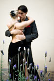 colour stock photography | Argentina, Buenos Aires, Tango dancers, image id S8-451-10874