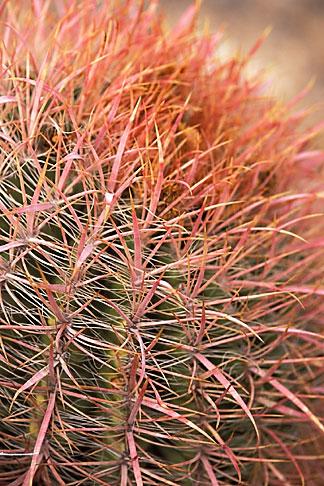 image 3-851-20 Arizona, Cactus
