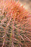 barren stock photography | Arizona, Cactus, image id 3-851-20