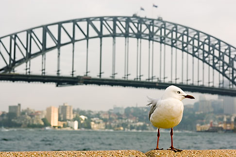 image 5-600-1405 Australia, Sydney, Sydney Harbour Bridge