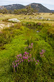 meadow stock photography | Australia, Australian Capital Territory, Namadgi National Park, Yankee Hat, image id 5-600-1624