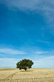 farm on hillside stock photography | Australia, New South Wales, Eucalyptus tree in field, image id 5-600-1818