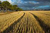 row stock photography | Australia, South Australia, McLaren Vale, Hay field, image id 5-600-2431