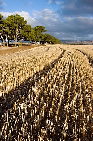 image 5-600-2433 Australia, South Australia, McLaren Vale, Hay field