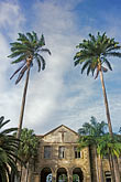 palm trees stock photography | Barbados, St. John, Codrington College, image id 0-206-97