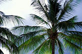 blue stock photography | Barbados, Palms, image id 3-387-60