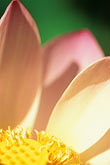 close up stock photography | Flowers, Lotus flower, image id 3-387-75