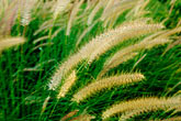 pure stock photography | Barbados, Grasses, image id 3-388-37