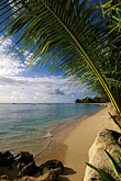 frond stock photography | Barbados, Holetown, Coral Reef Club, beach, image id 3-388-51