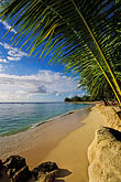 palms stock photography | Barbados, Holetown, Coral Reef Club, beach, image id 3-388-55