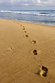 footprints on beach stock photography | Barbados, Bathsheba, Footprints, image id 3-483-65