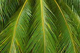 leaves stock photography | Barbados, St. Joseph, Andromeda Gardens, palms, image id 3-491-15
