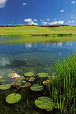 lakeside stock photography | Barbados, St. James, Sandy Lane golf course, lily pond, image id 3-496-58