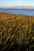 grass stock photography | California, San Francisco Bay, Palo Alto baylands, image id 0-500-1