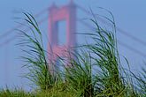 golden gate bridge towers stock photography | California, San Francisco, Crissy Field, GGNRA, Golden Gate and grasses, image id 1-61-32