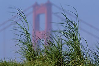 1-61-32  stock photo of California, San Francisco, Crissy Field, GGNRA, Golden Gate and grasses