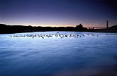avifauna stock photography | California, San Francisco, Tidal marsh at sunset with bridge, Crissy Field, image id 1-70-43