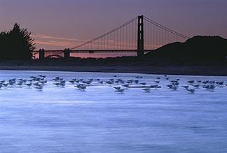 1-70-49 stock photo of California, San Francisco, Tidal marsh at sunset with bridge, Crissy Field