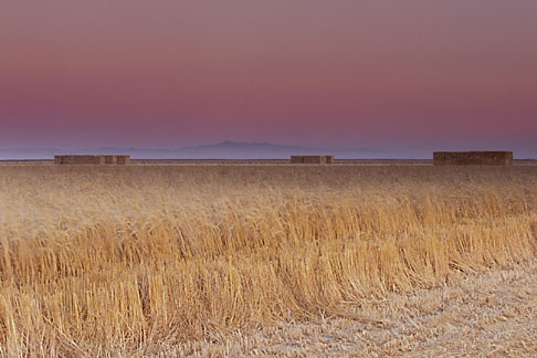 image 1-760-29 California, Sonoma County, Hay farming, Tubbs Island