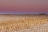 dusk stock photography | California, Sonoma County, Hay farming, Tubbs Island, image id 1-760-29