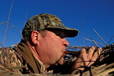 call stock photography | California, Suisin Marsh, Duck Hunting, Can-Can Club, image id 1-846-43