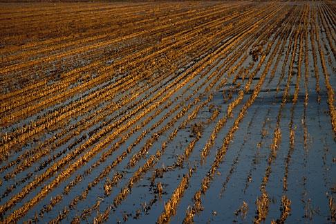 image 1-857-21 California, Delta, Staten Island, Fields flooded for habitat