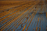 irrigate stock photography | California, Delta, Staten Island, Fields flooded for wildlife habitat, image id 1-857-21