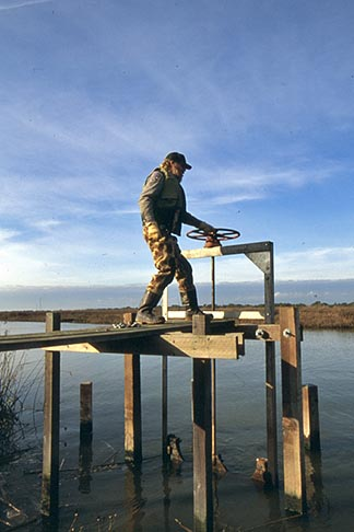 image 1-860-28 California, Sonoma County, San Pablo Bay Nat Wildlife Refuge, ranger