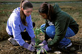 two young people stock photography | California, East Bay Parks, Arrowhead Marsh, Save the Bay restoration program, image id 1-864-18