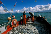 silvery stock photography | California, San Francisco Bay, Herring fishermen bringing in the nets, image id 2-231-98