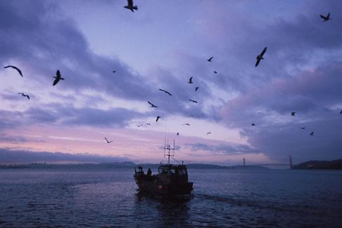image 2-232-80 California, San Francisco Bay, Herring Boat in early morning