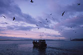 herring fisherman stock photography | California, San Francisco Bay, Herring Boat in early morning, image id 2-232-80
